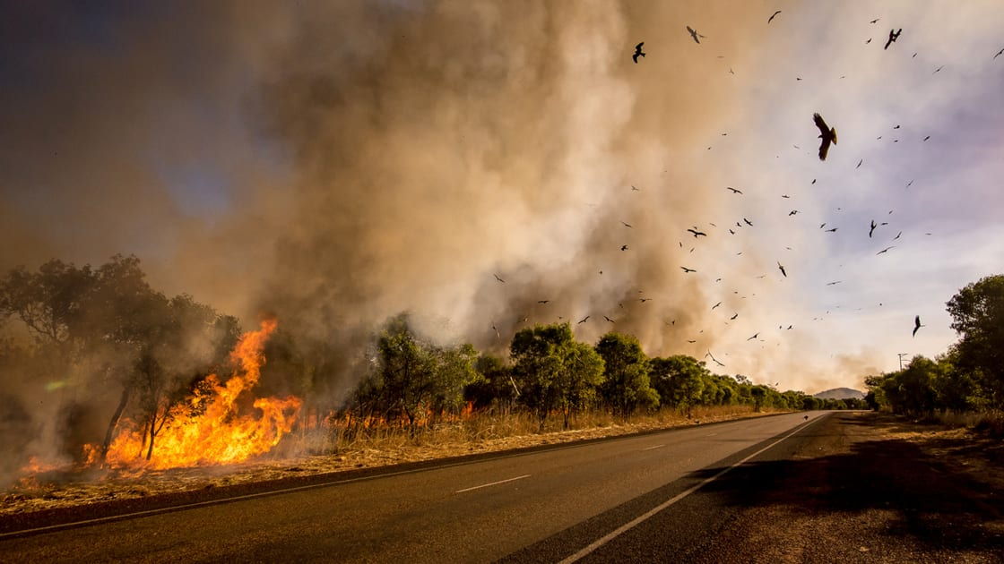 The Australian bushfires. Photographs courtesy of Getty Images